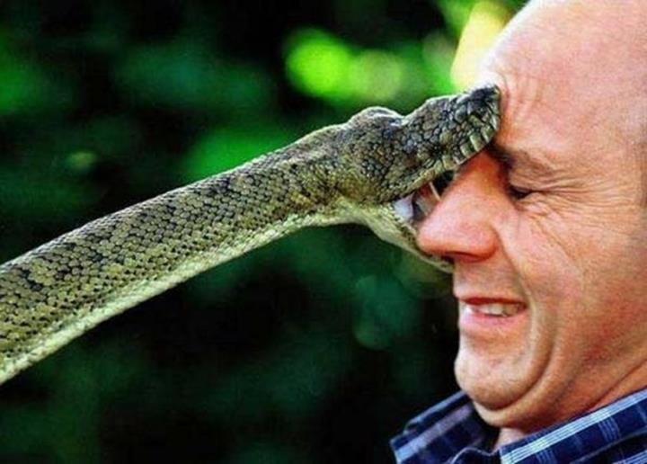 lien-peur-personnalite-serpent