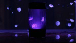 avoir un aquarium de m duses c est possible et super beau happie 39 s. Black Bedroom Furniture Sets. Home Design Ideas
