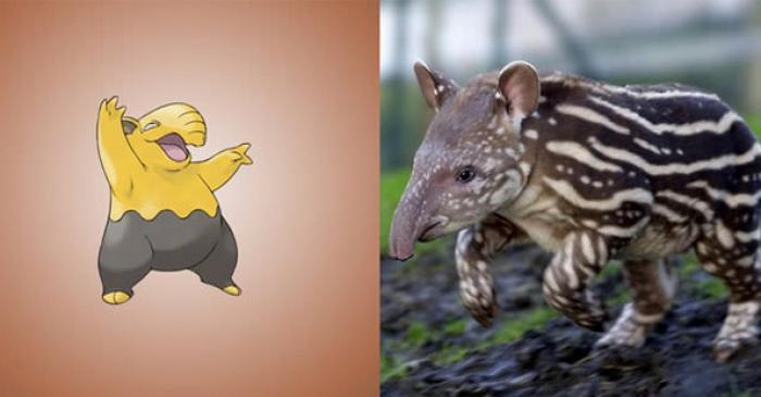 14-pokemon-inspires-danimaux-reels-14