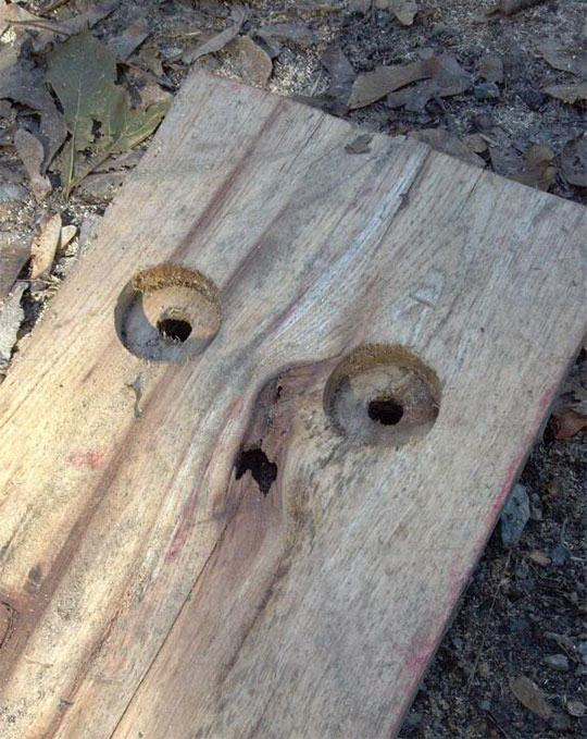 funny-wood-plank-face-scared-1